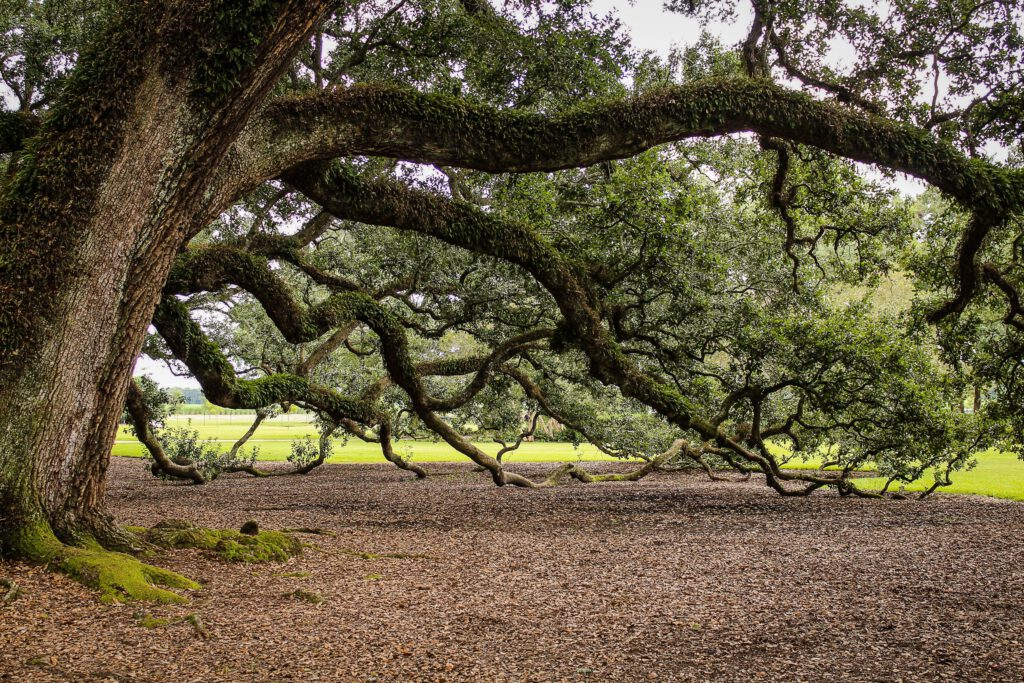 jakie działania podjąć jeśli gałęzie z sąsiedniego gruntu przeszły na naszą działkę