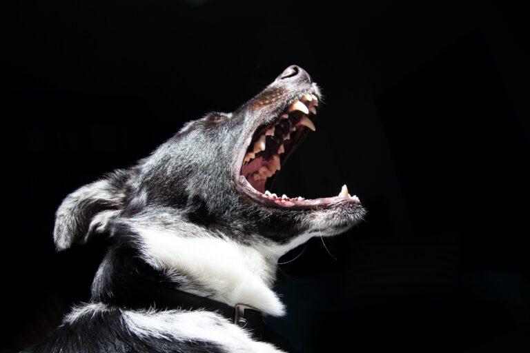 pogryzienie przez psa